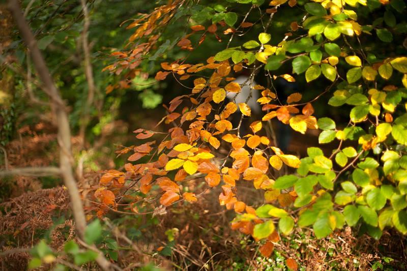 Tajemnice jesiennego lasu